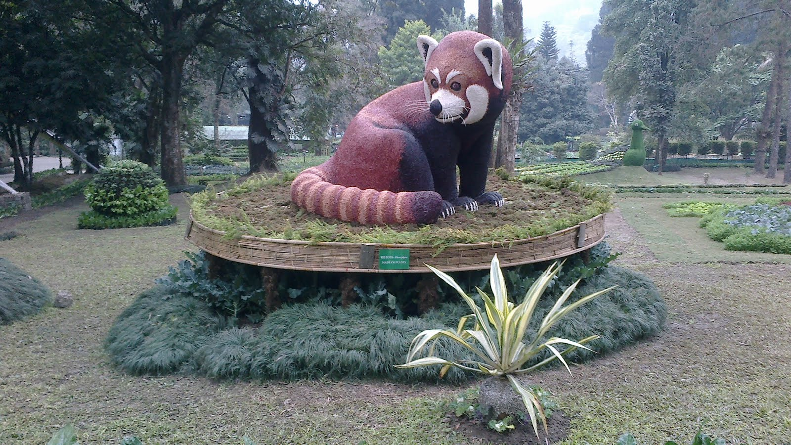 Attraction of Red Panda
