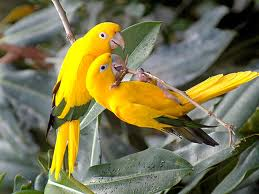 Download yellow parrot images