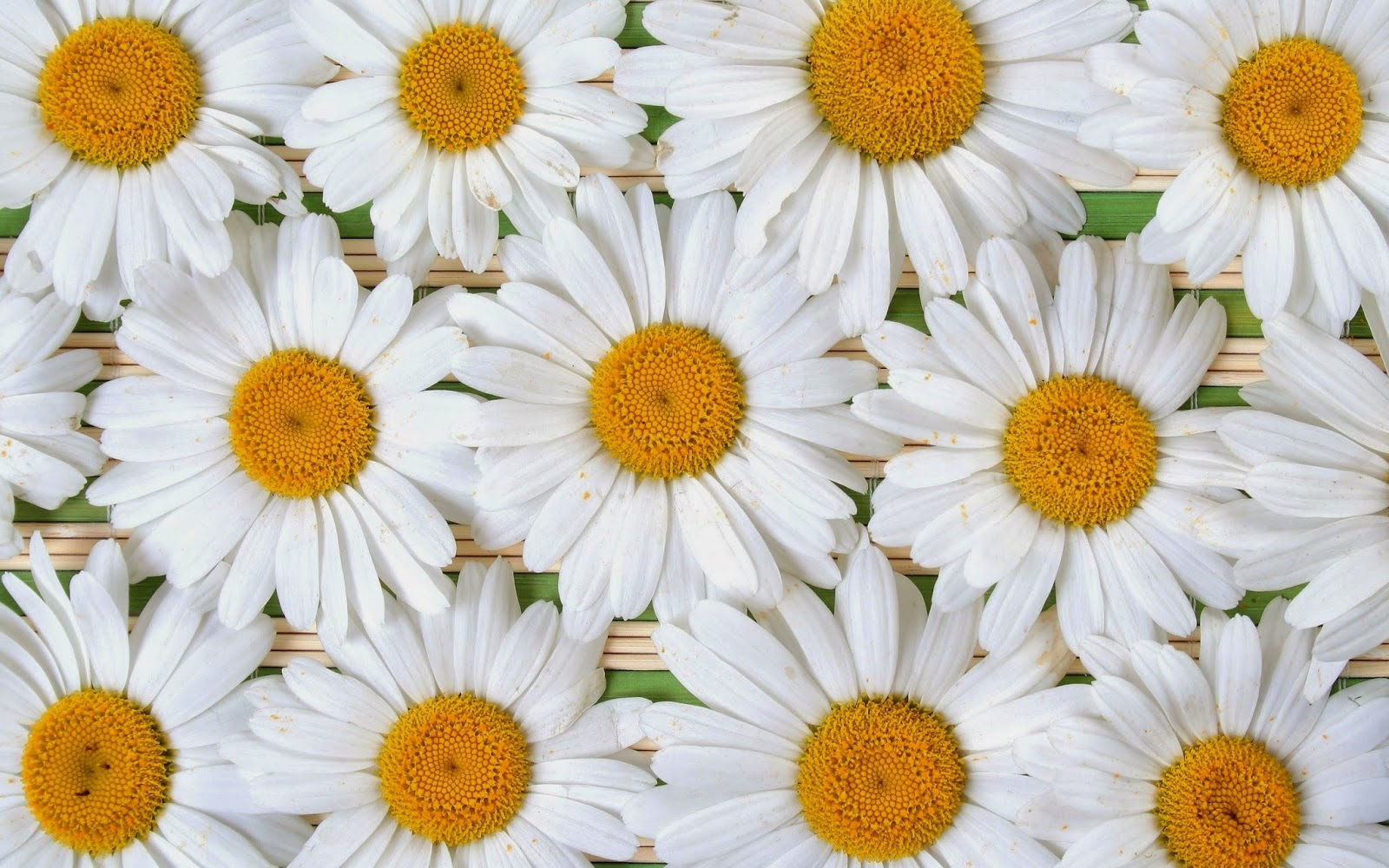 Daisy-flower-decorations-arrangements-picture.jpg