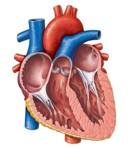 Cara Mengobati Jantung Bocor Paling Mujarab