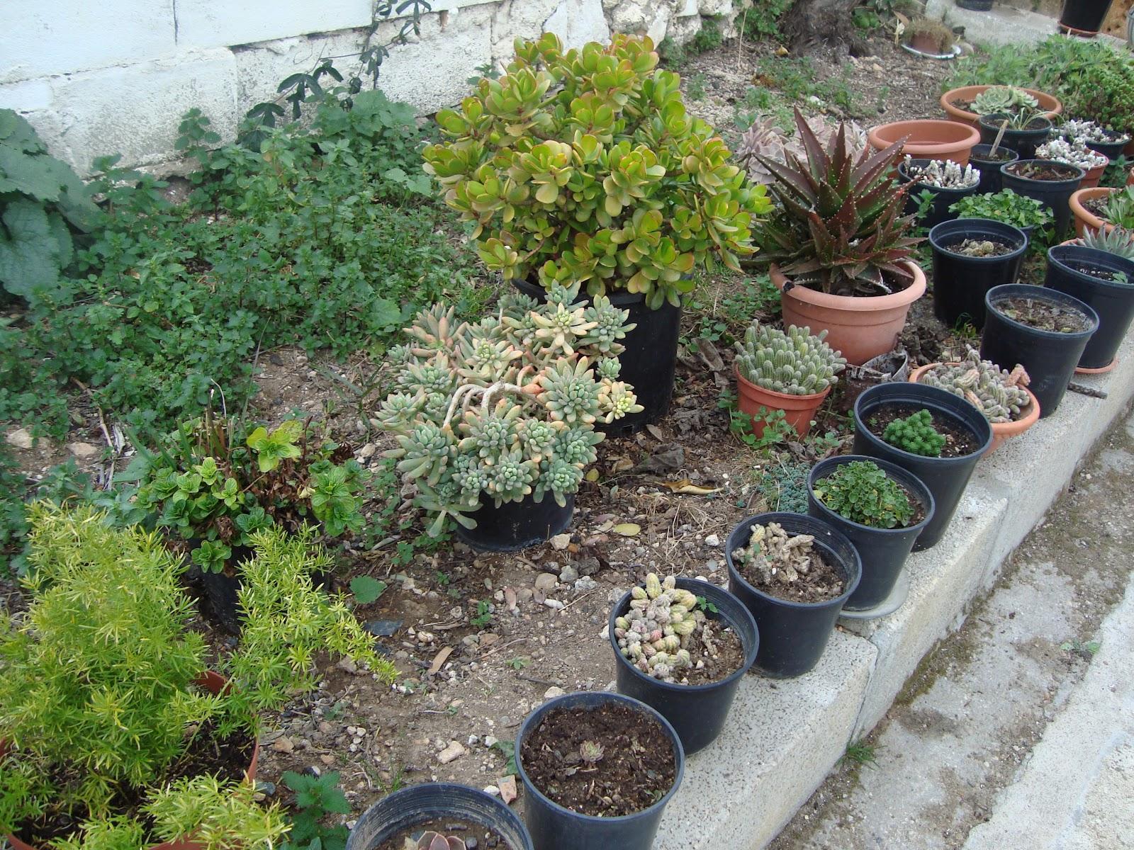 Museo exposiciones arte y ensayos plantas dom sticas y for Jardines con encanto fotos