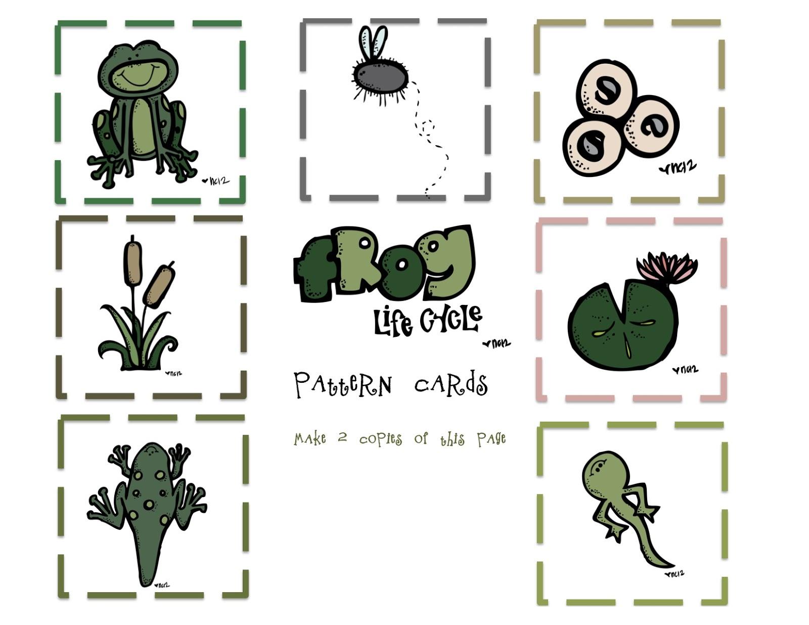 Frog life cycle printable kindergarten