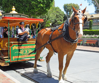 Disneyland Horse Drawn Street Car Main Street