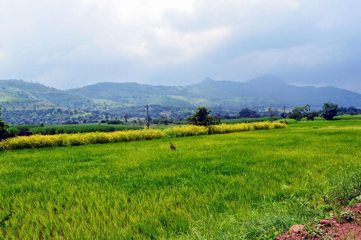 Indian farms