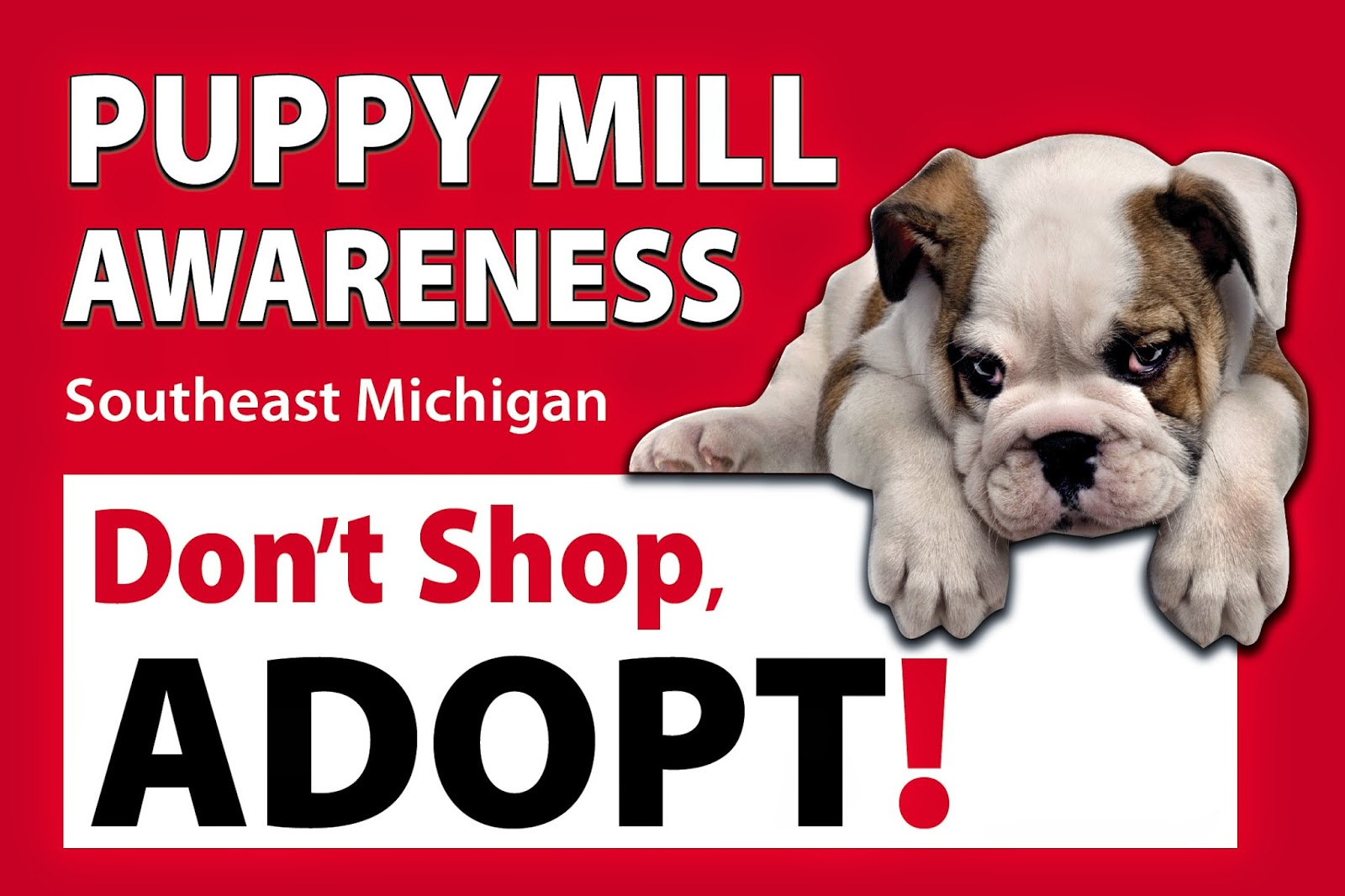 building awareness to animal abuse in puppy mills