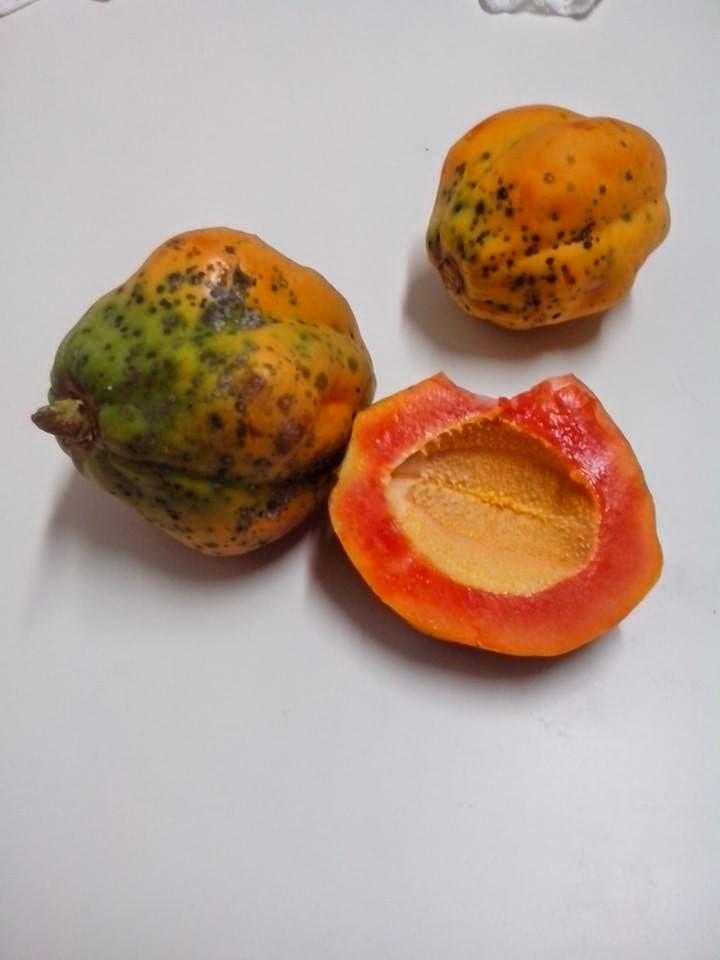 Mamão Papaya e Formosa