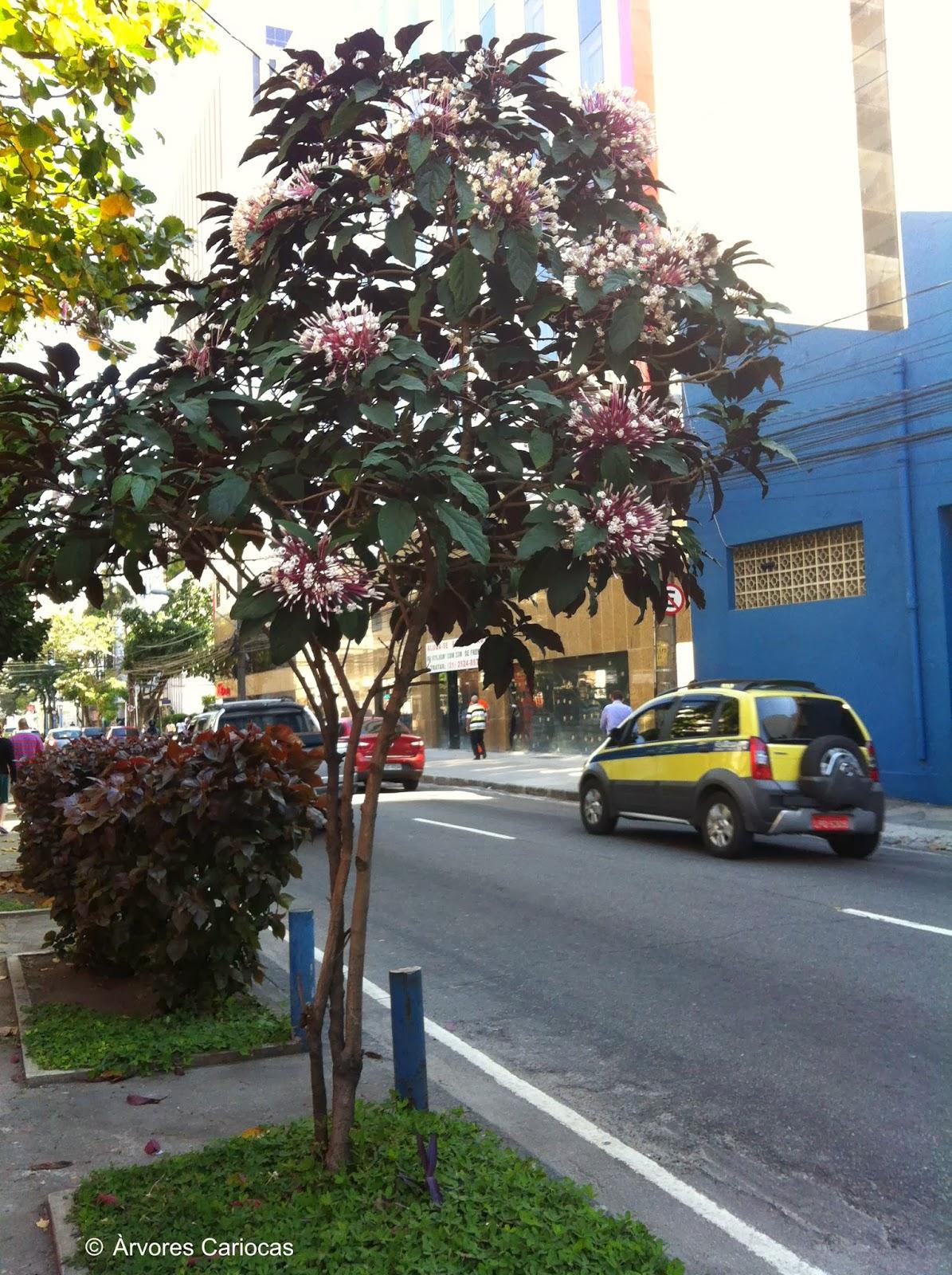 Fotos De Arvores Com Flores Amarelas - 7 Árvores excepcionais de outro mundo HypeScience