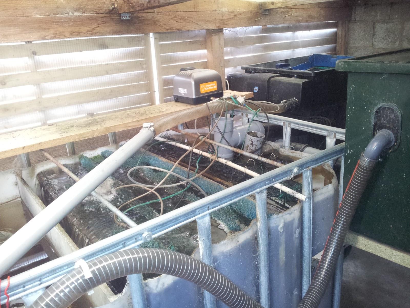 Fabrication bassin de jardin id es de for Filtration eau maison