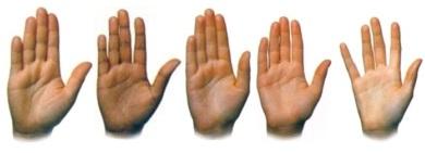 Thịt bàn tay mỏng và thịt bàn tay dày