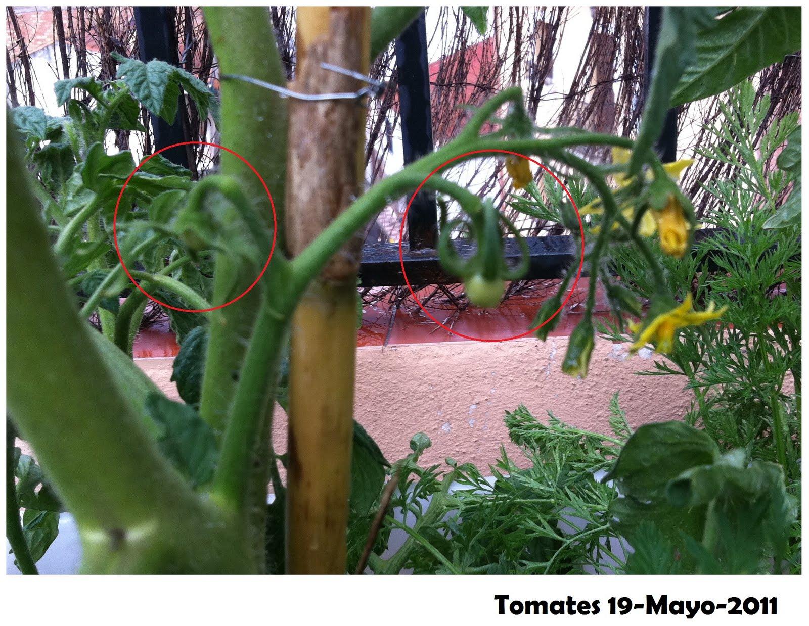 El Huerto de Macetilla: De minitomates y flores que se caen
