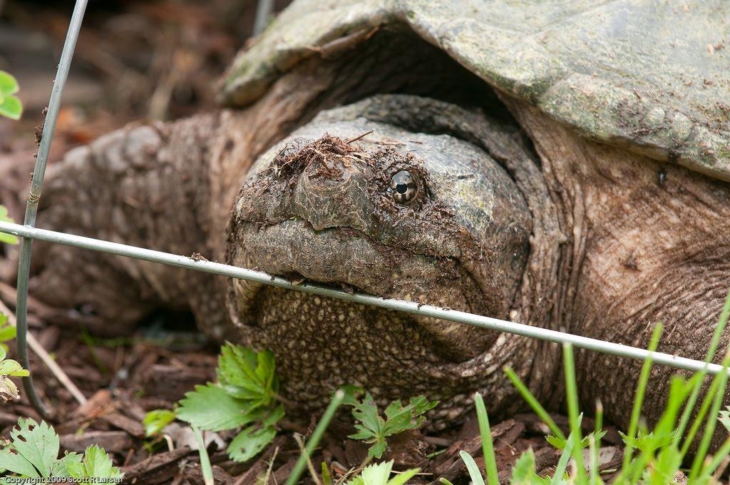 Channel 4 dating tortoise vs turtle
