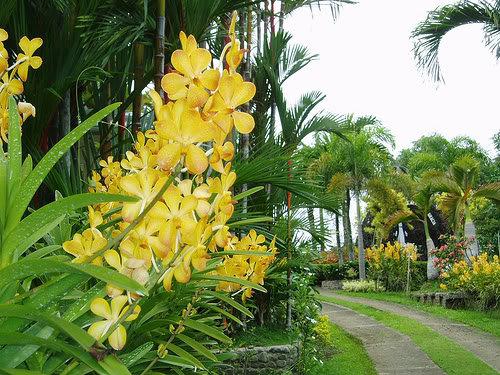 Yuhico Orchid Garden