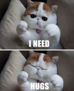 Kitty needs hugs!