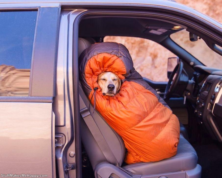 Maddie the Coonhound - An Avid Traveler Dog