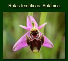 http://iberian-nature.blogspot.com.es/p/rutas-botanicas.html