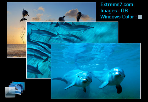 Microsoft Official Dolphins theme for Windows 7 and 8