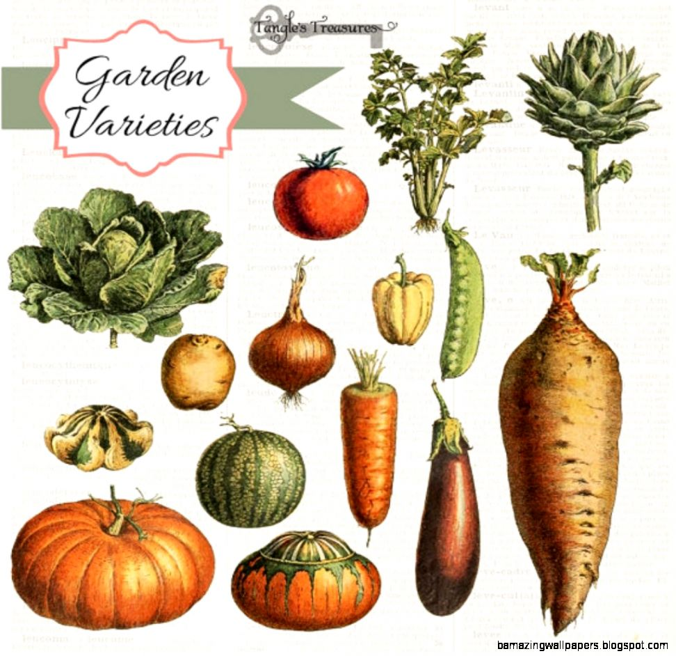 vintage vegetable clip art free vintage vegetable clipart