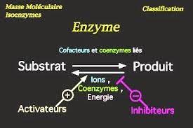 Cours  Enzymologie et Biochimie Métabolique svi s4