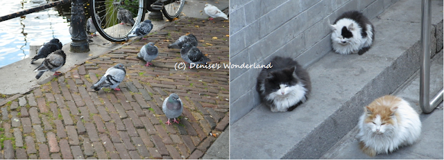 Pigeons in Amsterdam and Cats at Great Wall of China