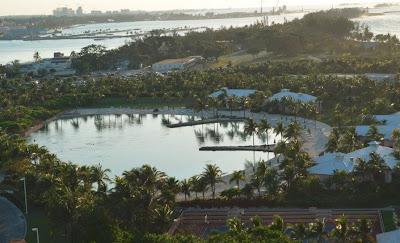 dolphin area atlantis resort