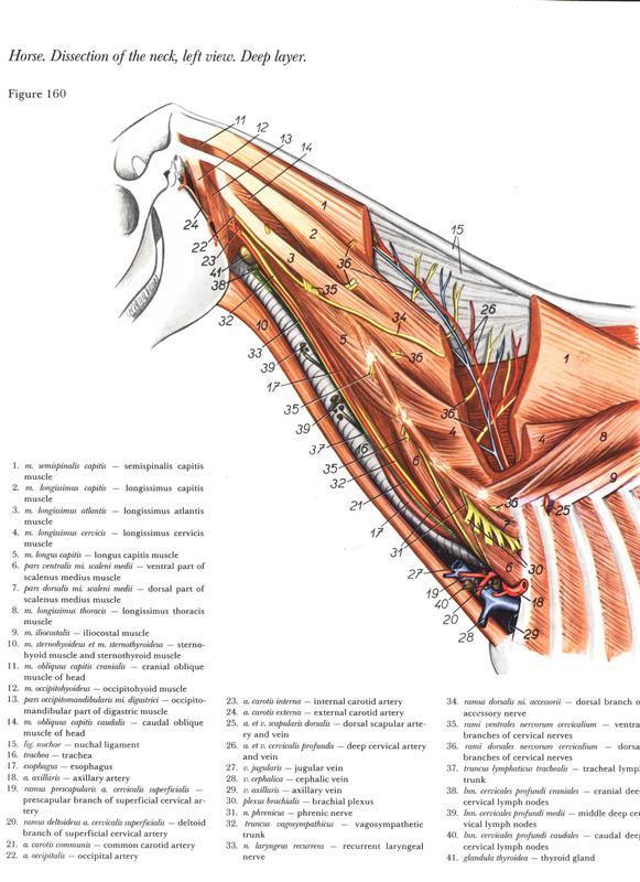 Anatomia e fisiologia livro