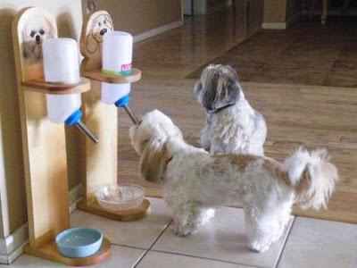 Dụng cụ cho chó uống nước tự động.