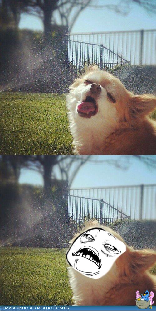 Santo cristo meme, cachorro