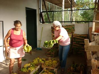 Agricultoras preparando produto para o P.A.A da CONAB junho de 2011