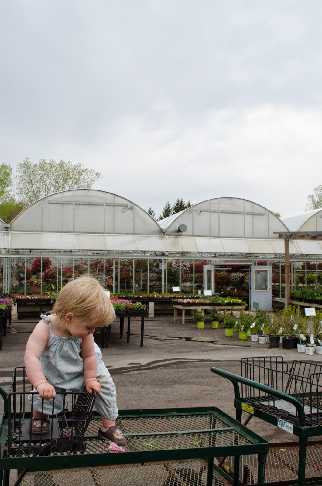 groth's country gardens | cedarburg, wi