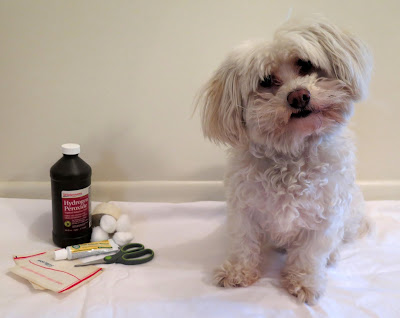 What's worse, over-vaccinating or under-vaccinating your dog?