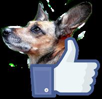 Facebook Kory