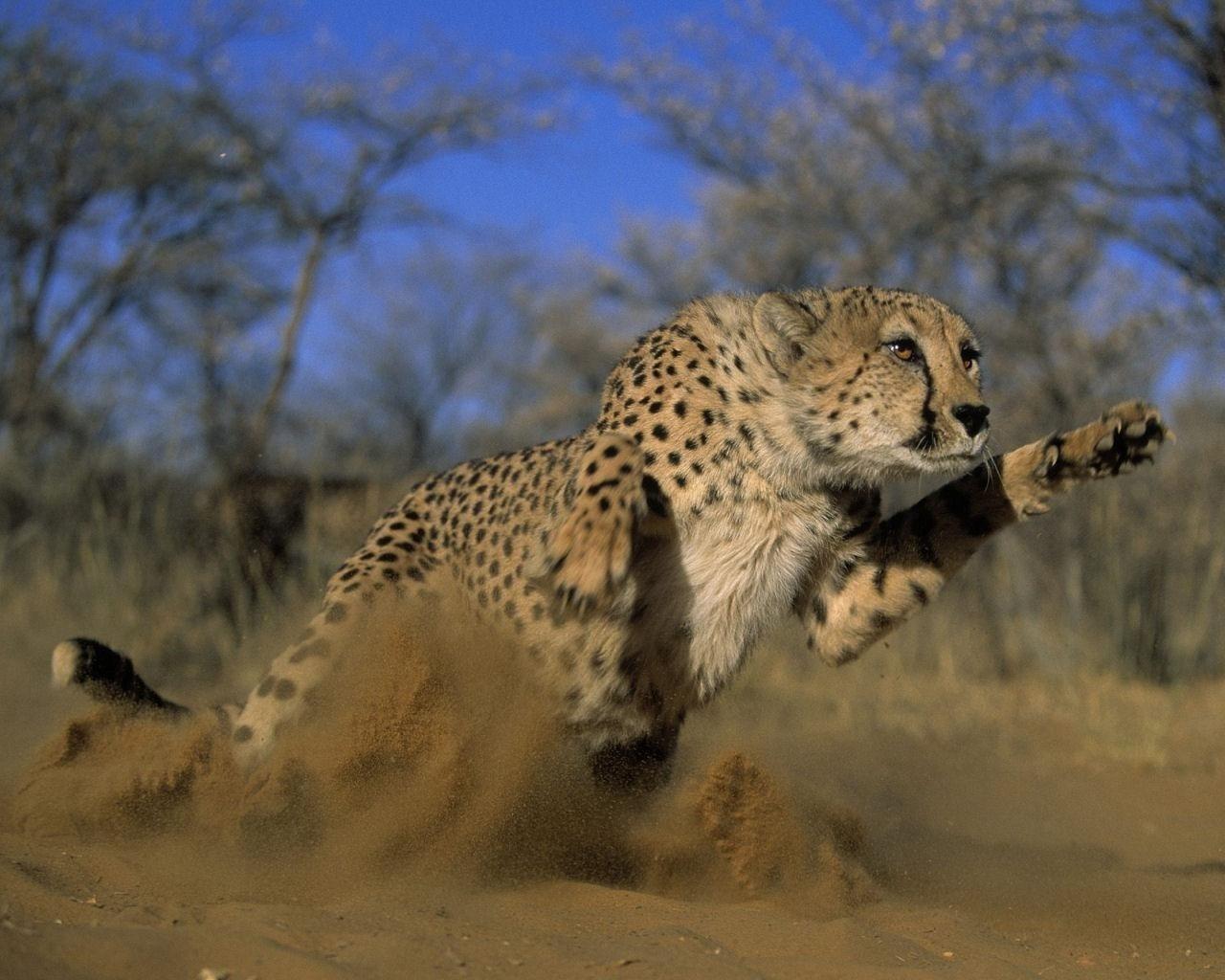 Encyclopaedia of Babies of Beautiful Wild Animals: Mara ...