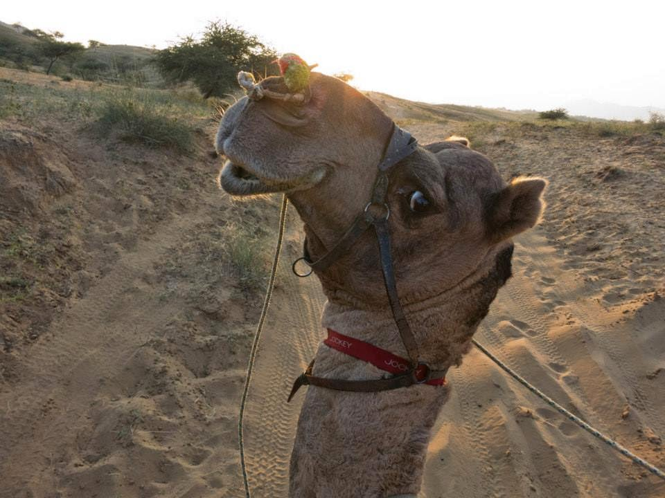 Funny animals of the week - 5 April 2014 (40 pics), camel smiling for camera