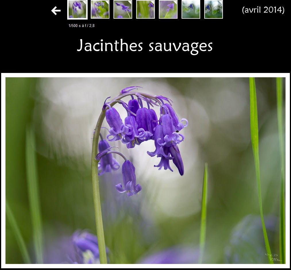 http://instantalautre.free.fr/galeries2014/flore/jacinthe/