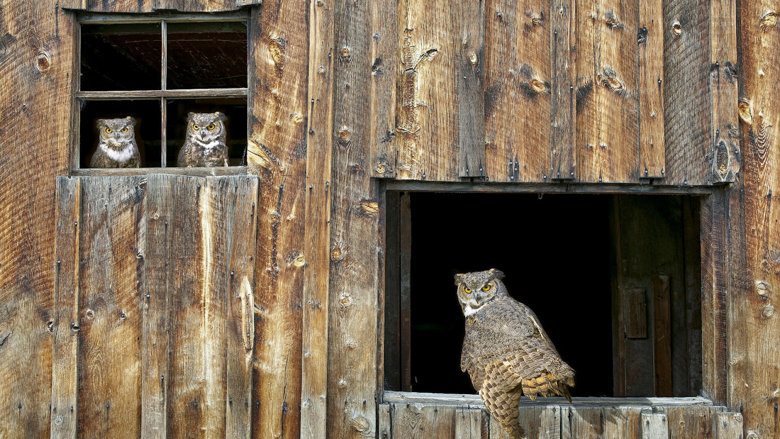 http://3.bp.blogspot.com/-rYX6aPyZono/UCJOA9rK7tI/AAAAAAAAAE8/hnvwYP-FQM4/s1600/owls-in-a-wooden-hutch-hd-owl-wallpaper-animal.jpg