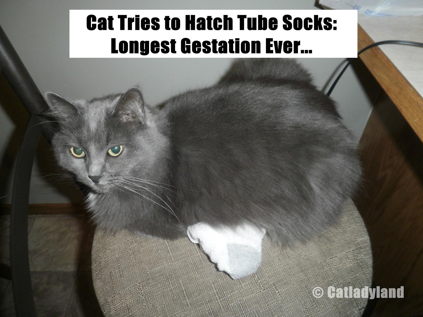 barium for cat scan