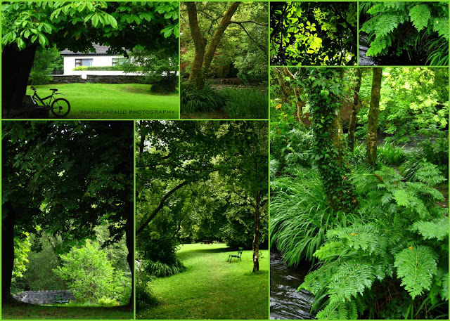 summer green in Oughterard Shrubbery© Annie Japaud 2013, photography, blog, Oughterard, Galway, Ireland