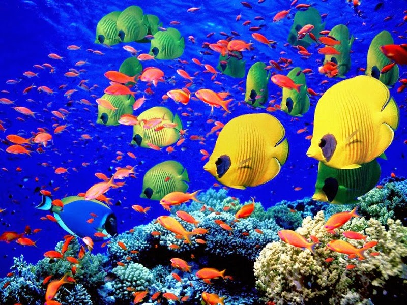 Laut-Merah-Mesir