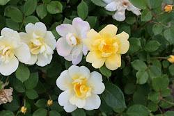 Flowers From Silke