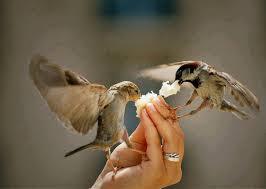 الرحمة، التراحم،الرحمة عند الطيور، رحمة الكائنات الحية فيما بينها