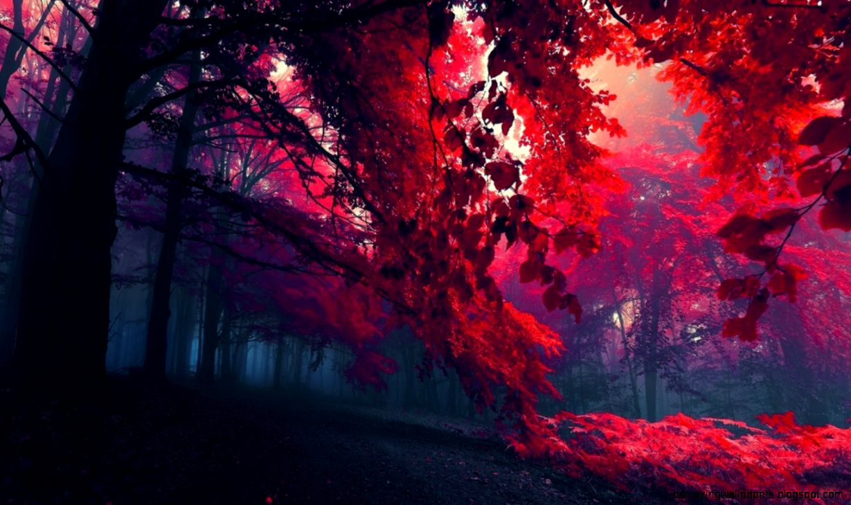 Red autumn leaves on trees wallpapers and images   wallpapers