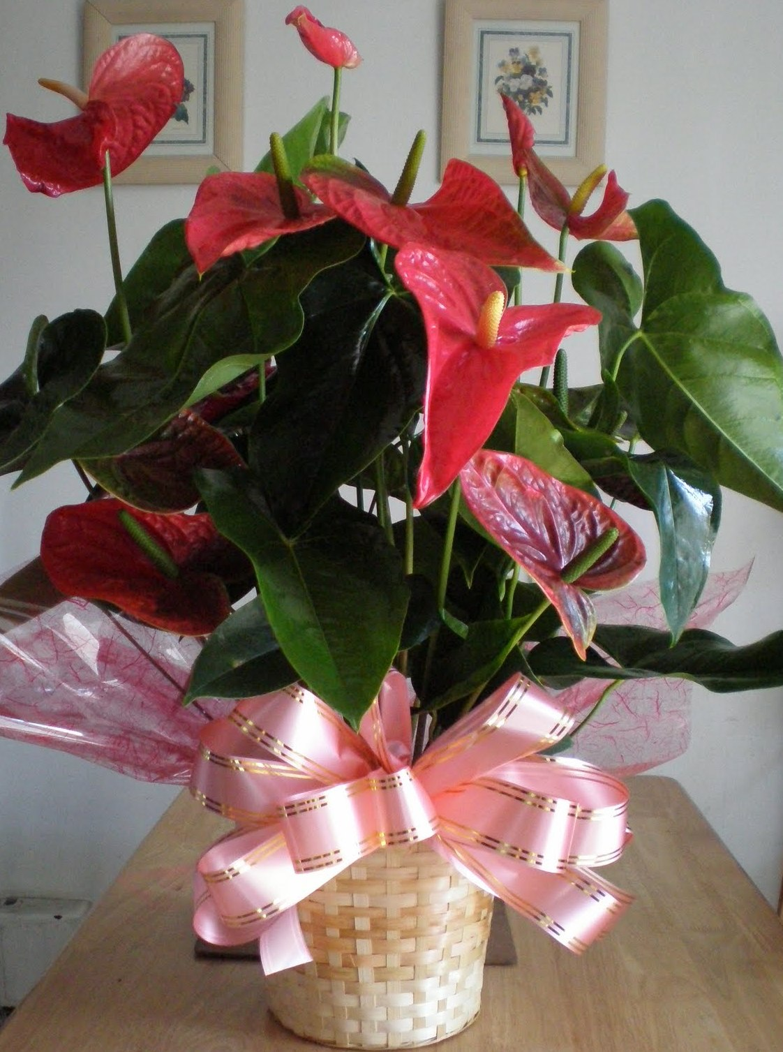 Anthuriam flowers when it comes to flowers us brits are a traditional bunch with the results of a survey released today showing that popular classics such as roses izmirmasajfo