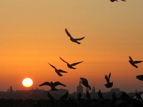 http://3.bp.blogspot.com/-rZhpAb8F9lQ/TnTYhNVEltI/AAAAAAAAE68/6qEcRQY5lDI/s1600/passaros.jpg