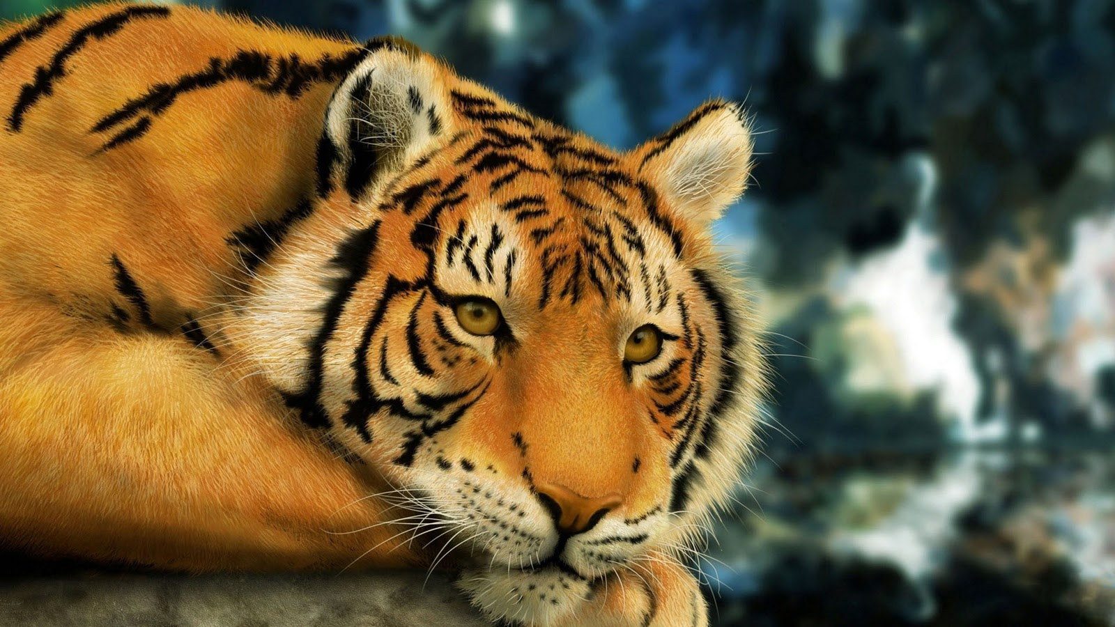 hd tiger wallpaper