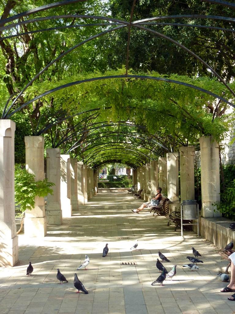 El arco de la drassana los jardines de s hort des rei for Arboles enanos para jardin