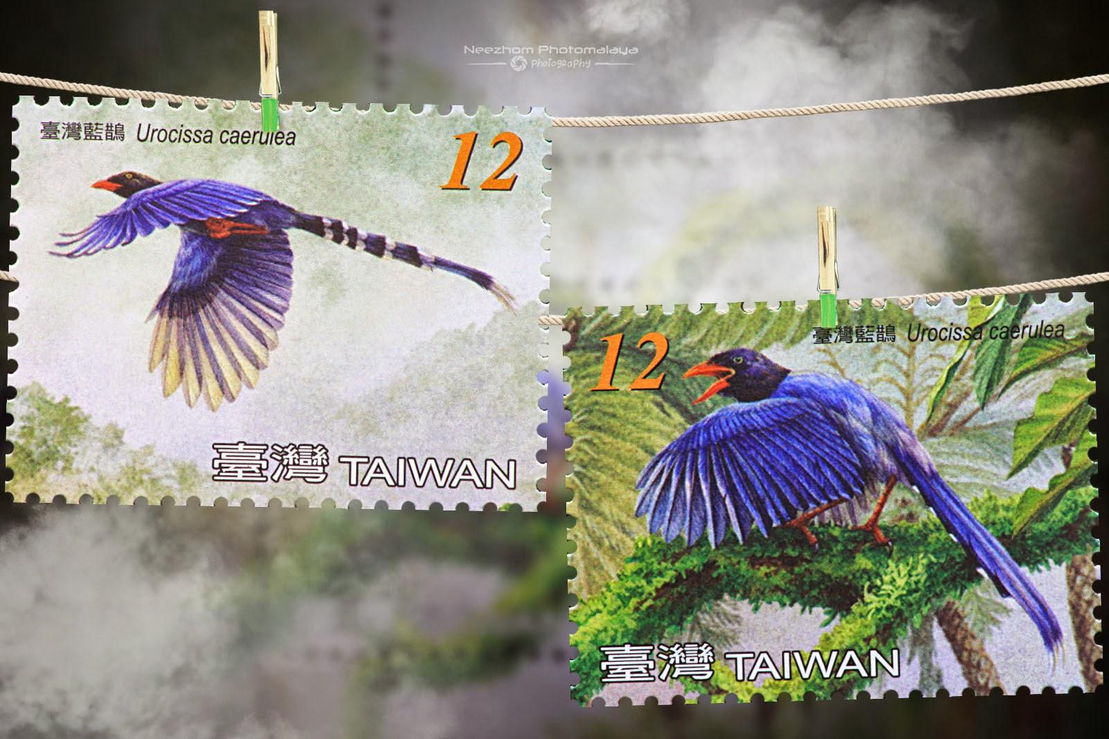 Taiwan 2008 Blue Magpie stamp - Urocissa caerulea NT$12