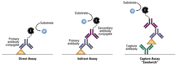 indirect elisa assay protocol Immunoassay protocol – bestprotocols® page 2 of 6 enzyme linked immunosorbent assay (elisa) research use only revised 10-01-2013 provided as a courtesy by.