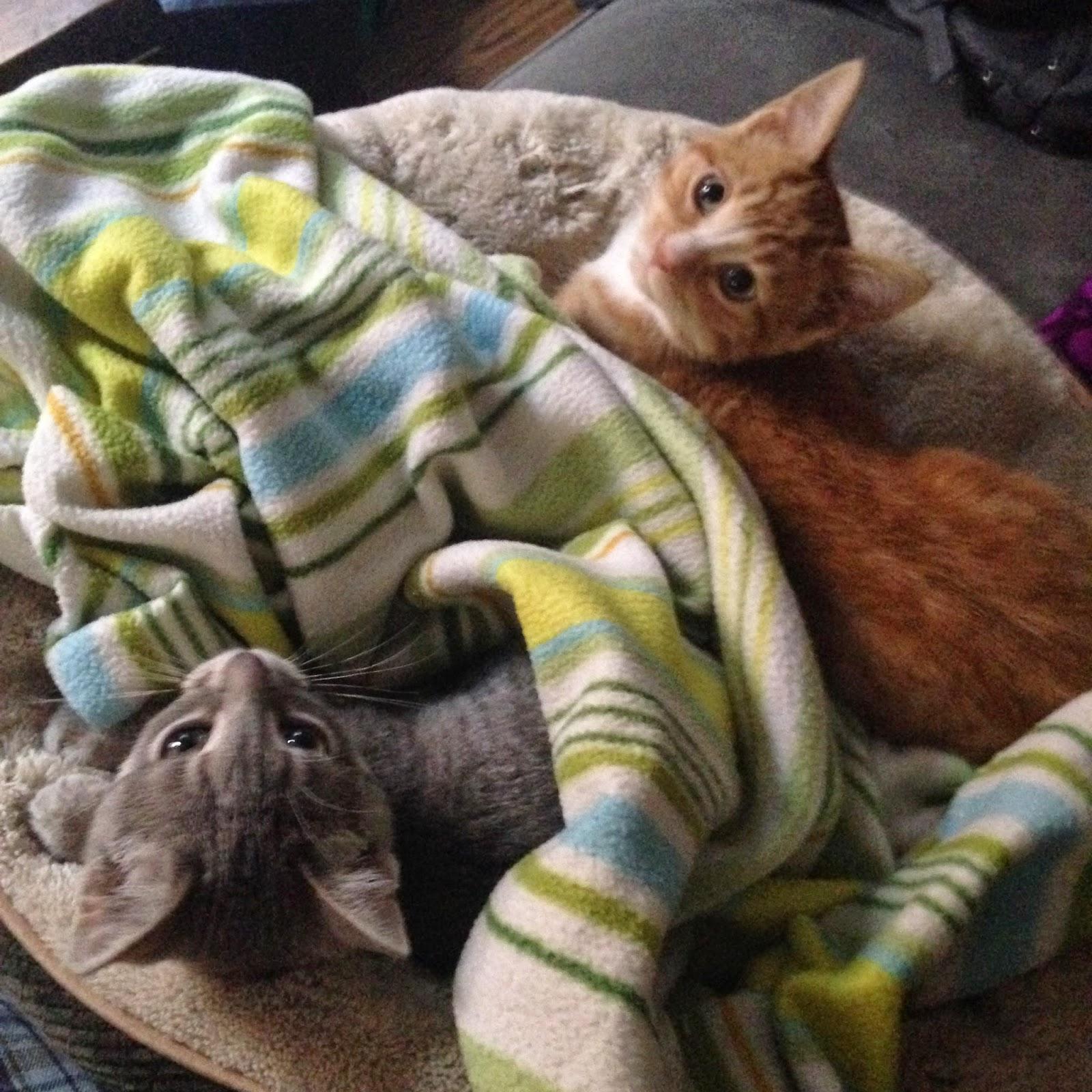 Kittens, Adorable Kittens, Tabby Cat