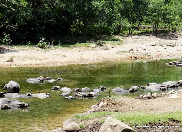 Parc national de Bach Ma, Hue