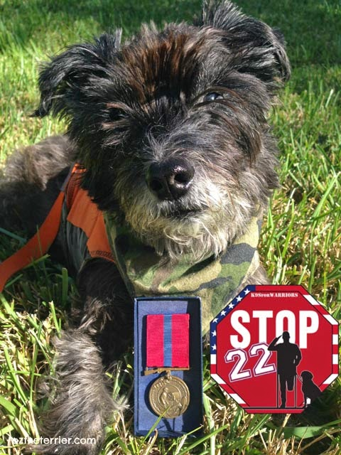 Oz the Terrier joins the STOP22 Movement with K9s for Warriors